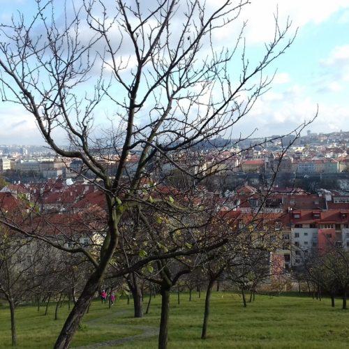 Praha 053